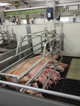 """""""格式塔""""产房母猪饲喂系统说明"""